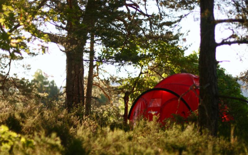 Rødt telt i morgensol. Foto: Synne Hansen